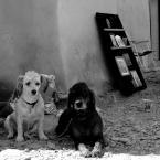 "fand ""artdogs......."" (2008-02-16 17:04:49) komentarzy: 11, ostatni: Ladne ;)"