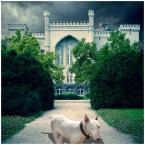 """MikE_ZorbA """"głupio ucięty i centralnie umiejscowiony spacerujący brzydki pies"""" (2008-02-24 21:32:29) komentarzy: 17, ostatni: po Waszych komentarzach kupiłem Krainę Chichów i przeczytałem z prawdziwą przyjemnością :) Świetna książka Dzięki :)))"""