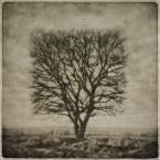 """klimat """""""" (2008-02-25 09:11:45) komentarzy: 43, ostatni: qu..... jak się strzyże tak drzewa - w moim ogrodzie  tak nie rosnom ..."""