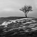 """Michał Drawert """"Wzgórze"""" (2008-02-27 08:45:01) komentarzy: 23, ostatni: podoba mi się to zdjęcie"""