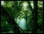 "whitepony ""5:00 rano"" (2008-02-27 10:07:09) komentarzy: 7, ostatni: ładne, soczyste :)"