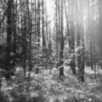 "hunting_bears """" (2008-02-28 20:16:04) komentarzy: 9, ostatni: Super."