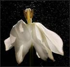 """Aga78 """"\\""""wśród gwiazd\\"""""""" (2008-02-28 22:10:46) komentarzy: 48, ostatni: świetnie pokazane"""