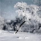 """ennio """"***"""" (2008-03-01 18:51:11) komentarzy: 30, ostatni: ładne jest, śnieg na drzewach, szron na niebie"""