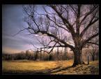 """paweljg """"Pod drzewem..."""" (2008-03-04 17:13:37) komentarzy: 8, ostatni: Fajny kadr, kolory może nie do końca."""