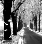 """skup-metali-kolorowych """"Treeman"""" (2008-03-14 16:17:27) komentarzy: 10, ostatni: efekt przypadkowy ale wybrany specjalnie z kilku zdjęć ;)"""
