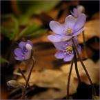 """koszmar69 """"nadeszła..."""" (2008-03-30 16:52:12) komentarzy: 20, ostatni: pięknie"""