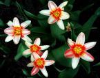 """ulka kalinowska """"Wiosna! w moim ogródku:)"""" (2008-03-30 20:25:36) komentarzy: 16, ostatni: cieszy mnie to:)"""