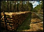 """andrzej.s """"Wyrąbane z lasu."""" (2008-04-01 15:37:33) komentarzy: 12, ostatni: fajne światło,kadr też ok"""