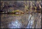 """BALTORO """"wiosna w rezerwacie Wrzosy"""" (2008-04-03 10:29:48) komentarzy: 4, ostatni: w pozornym bałaganie można odnaleźć prawidłowości, symetryczności i to zaciekawia."""