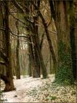 """Wołodytjowski """"Wiosna w pełni"""" (2008-04-09 10:14:39) komentarzy: 12, ostatni: pięknie"""