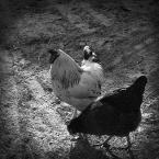 """rudamary """"kurczaki"""" (2008-04-10 13:37:41) komentarzy: 7, ostatni: niezla zakochana para :) podczas lunchu :D"""