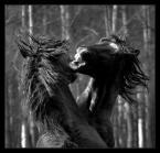 "Karolina Wengerek ""..."" (2008-04-15 21:23:15) komentarzy: 22, ostatni: rewelacja"