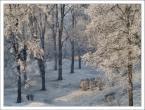 """paweljg """"Mroźny poranek"""" (2008-04-16 19:34:10) komentarzy: 10, ostatni: dokladnie ten park :]"""