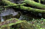 """Slawekol """"Bagno 1"""" (2008-04-17 18:20:10) komentarzy: 10, ostatni: A mnie sie podoba:) ciekawe swiatelko"""