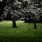 """Nickita """"Zapachniało..."""" (2008-04-22 10:52:32) komentarzy: 4, ostatni: jest takie... duszne... od kwiatów, od soczystości trawy... podoba się bardzo.. pozdrawiam"""