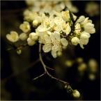 """koszmar69 """"Bez tytułu :)"""" (2008-04-26 02:15:41) komentarzy: 13, ostatni: poetyckie"""