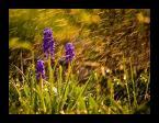 """xoe """""""" (2008-04-28 18:48:12) komentarzy: 7, ostatni: Szafirek, bardzo ładnie przedstawiony :)"""