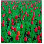 """CiasteczkowyPotwór """"..."""" (2008-04-30 20:14:13) komentarzy: 5, ostatni: Kolory nie są podkręcane"""