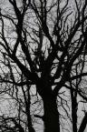 """robertzwanyjankiem """"las gutwin"""" (2008-05-01 19:47:00) komentarzy: 1, ostatni: hmm... a o co chodzi??"""