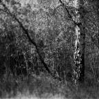 """ajsikel """"szelesty"""" (2008-05-14 23:16:31) komentarzy: 12, ostatni: szarości szelestu ..............."""