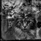 "ojosdebrujo ""znikający kot z Cheshire"" (2008-05-18 21:37:56) komentarzy: 38, ostatni: :)"