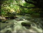 "robert37 ""Leśna kraina..."" (2008-05-23 21:40:44) komentarzy: 34, ostatni: :)"