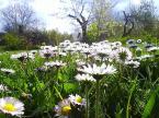"""shenice """"wiosna"""" (2008-05-29 07:31:59) komentarzy: 5, ostatni: nawet mnogość kwiatów trzeba pokazac z jakimś pomysłem.. przepalenie straszliwie przeszkadzają.. pozdrawiam"""