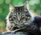 """fifka """"Wlazł kotek na płotek i mruga"""" (2008-05-29 22:47:26) komentarzy: 16, ostatni: To ona? W takim razie królowa ;-) Foto ładnie rozmyte>"""