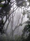 """Maciek Froński """"Świt w dżungli"""" (2008-06-10 14:30:14) komentarzy: 31, ostatni: Dobrze wybrany kadr"""