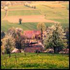 """malisz """"pół miliona pikseli z landrynkowej doliny ;"""" (2008-06-12 16:11:59) komentarzy: 30, ostatni: przyjemny widok"""