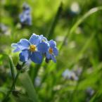 """agakolo """"***"""" (2008-06-14 23:58:06) komentarzy: 1, ostatni: piękne kwiaty. jednak oświetliłbym jakoś inaczej te płatki na pierwszym planie."""
