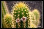 """piotrok99 """"ludzkie oblicze kaktusa..."""" (2008-06-16 17:17:27) komentarzy: 1, ostatni: calkiem zabawne:)"""