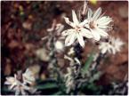 """Roksann """""""" (2008-06-28 11:27:15) komentarzy: 5, ostatni: Ostrość jest na słupkach kwiatu. ;]"""