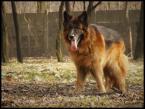 """razor """"lokis 23"""" (2008-06-29 18:44:09) komentarzy: 3, ostatni: Masz pieknego psa!"""