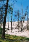 """baha7 """"zasypany las"""" (2008-07-08 22:02:24) komentarzy: 2, ostatni: skoro ludzie w tym rejonie  nie ingerują- to i ja nie """"bawiłam """" się w obróbkę"""