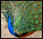 """piotrok99 """"taaaaki ptak..."""" (2008-07-09 18:03:32) komentarzy: 1, ostatni: udany kadr, całkiem ładnie wyszło :)"""