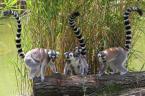 """Chrisl """"Spisek lemurów..."""" (2008-07-15 22:15:14) komentarzy: 3, ostatni: syskie cy;)"""