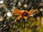 """krys_art """"klimacik"""" (2008-07-17 10:39:30) komentarzy: 14, ostatni: pięknie.... brawa, Krzyś:)"""
