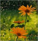 """krys_art """"W innym ujęciu"""" (2008-07-19 13:05:30) komentarzy: 6, ostatni: Bardzo fajne. Czy to deszcz?"""
