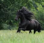 """Gosia Mąkosa """"..."""" (2008-07-22 21:06:04) komentarzy: 13, ostatni: Fantastyczny koń, fantastyczne zdjęcie. Głęboki szacunek dla autorki. Gratuluję!!!"""