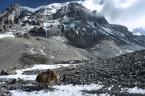 """hen0i """"Nepal, Himalaje, gdzies na 5400m"""" (2008-07-28 10:02:47) komentarzy: 17, ostatni: +++"""