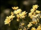 """sbms """"magia ogrodu 3"""" (2008-07-29 16:11:24) komentarzy: 10, ostatni: Świetna fotka.Podoba się i to bardzo"""