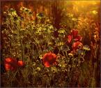 """krys_art """"Bałagan w burzy słonecznej"""" (2008-08-05 19:30:00) komentarzy: 17, ostatni: ŚŁOŃCE NA ŁĄCE :)"""
