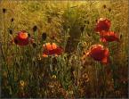 """krys_art """"Do boju"""" (2008-08-05 19:44:45) komentarzy: 6, ostatni: pięknie, takie miękkie ciepłe lato pachnące sianem ;)"""