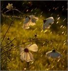 """krys_art """"Klimacik"""" (2008-08-08 14:52:45) komentarzy: 35, ostatni: poezja"""