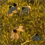"""krys_art """"Klimacik deszczowy"""" (2008-08-09 17:53:40) komentarzy: 19, ostatni: a jakze ,przypada do gustu fotka i niesamowicie mily Autor wnioskujac z zaproszenia,az z przyjemnoscia sie z niego korzysta:)pozdrawiam"""