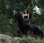 """Gosia Mąkosa """"..."""" (2008-08-11 20:30:00) komentarzy: 7, ostatni: Hmmm, skoro ma skrzydła to po co na koniu jeździ? Trochę za dużo wszystkiego.."""