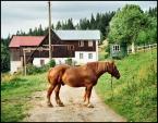 """Cigana """"Międzygórze"""" (2008-08-13 21:50:05) komentarzy: 2, ostatni: Koń - jaki jest? Każdy widzi..."""