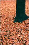 """Scalpello """"Jesień"""" (2008-08-17 12:24:59) komentarzy: 2, ostatni: nie powala"""